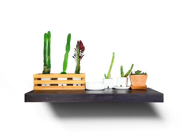 白い背景の上の緑のサボテン植物、多肉植物が壁に掛かっています、クリッピングパス、朝の木製の棚に多肉植物