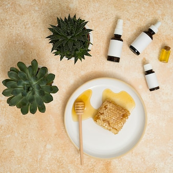 Green cactus plant with essential oils and honey comb on ceramic plate with dipper against textured background
