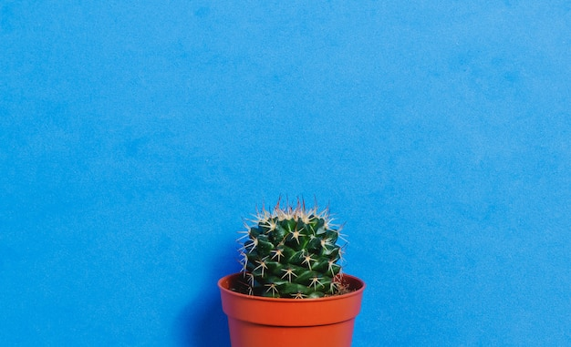Green cactus in pot on blue pastel color background