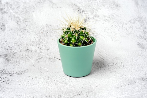 Green cactus in a pot on a stone table
