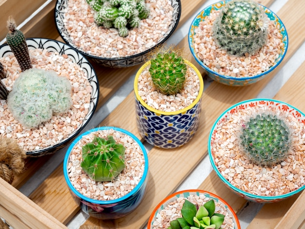 Green cactus in pot. various cactus in beautiful ceramic pots on wood box, top view.