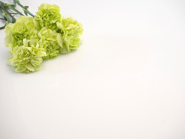 Green carnation on white background