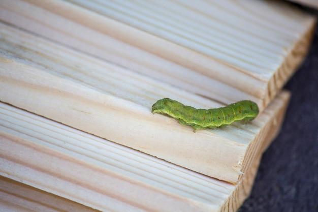 Зеленая гусеница на деревянных рейках