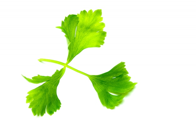Green celery leaves isolated on white
