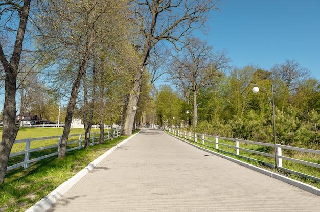 Зеленый центральный парк на закате. зеленые леса природные пейзажи в городском парке