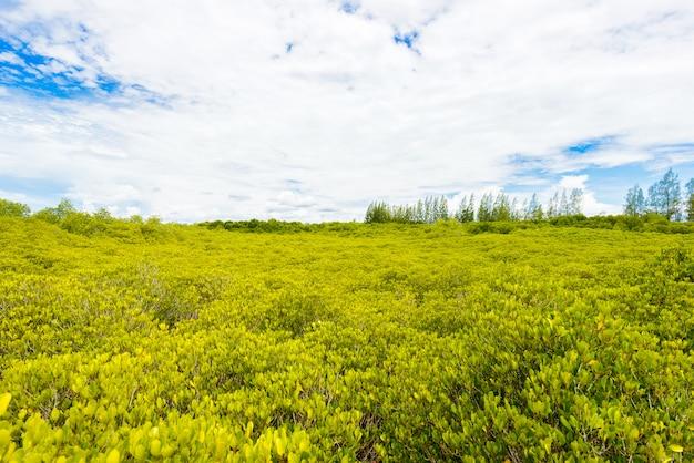 Зеленый фон поля цериопс тагал в мангровых лесах