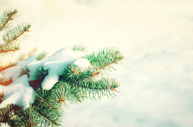 Green christmas tree on a background of snow in the winter forest