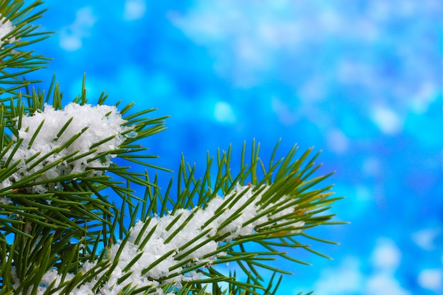 Green christmas tree on blue