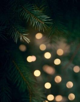 Зеленая ветка елки и желтые огни