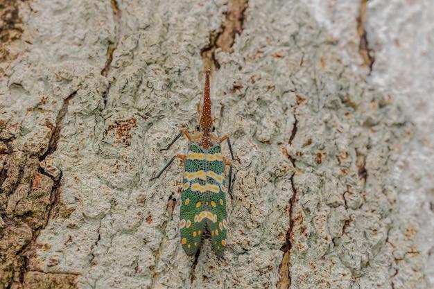 Зеленая цикада на дереве