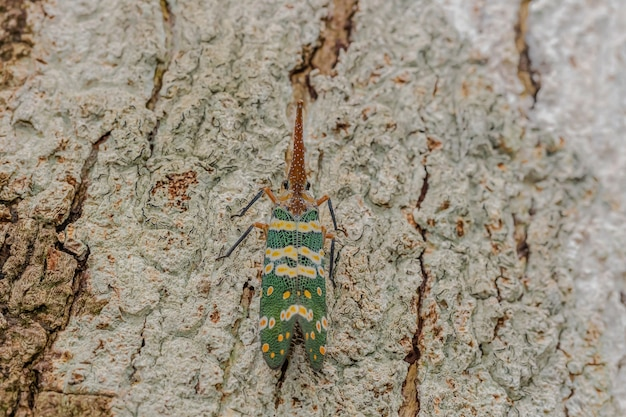 Green cicada on the tree