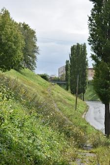夏の緑豊かな街の通り