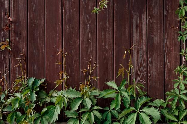赤茶色の木の板に緑の登山家のつる植物