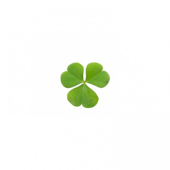 Green clover leaf isolated on white