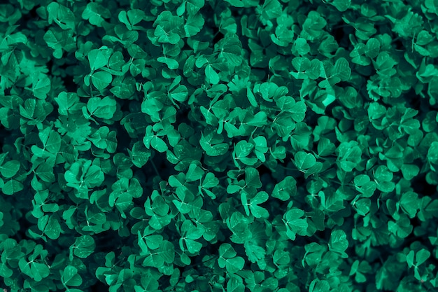 Green clover plant grow abstract background top view