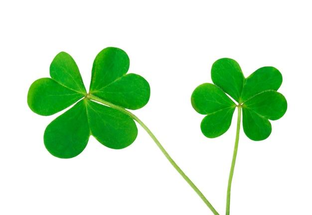 세인트 패트릭 데이의 녹색 클로버 상징