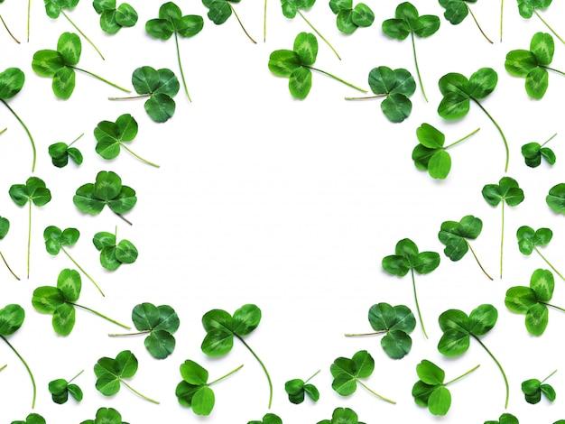 聖パトリックの日の休日の象徴である緑のクローバー。