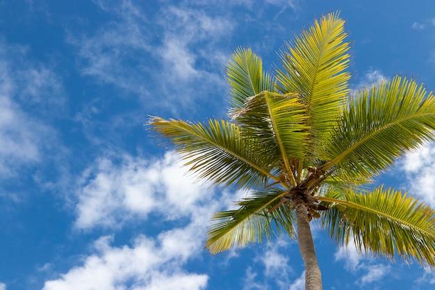 空と雲の表面に緑のココヤシの葉