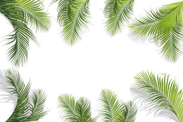 Рамка из зеленых кокосовых листьев, изолированные на белом фоне