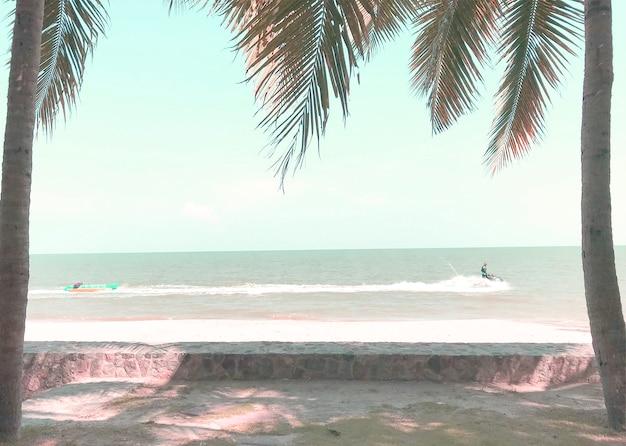 햇살 가득한 해변의 잔디에 있는 녹색 코코넛 야자수