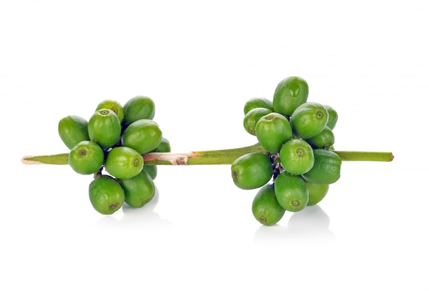 Green coffee beans isolated