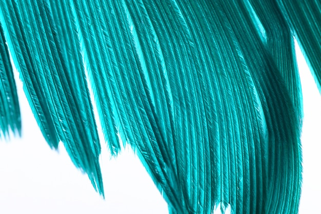 Green color feather