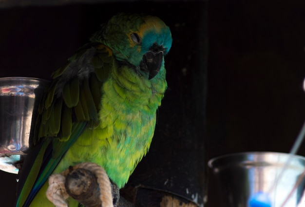 Green colorful parrot sleeping