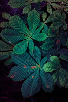 Green and colorful plant leaves textured in the garden in summer