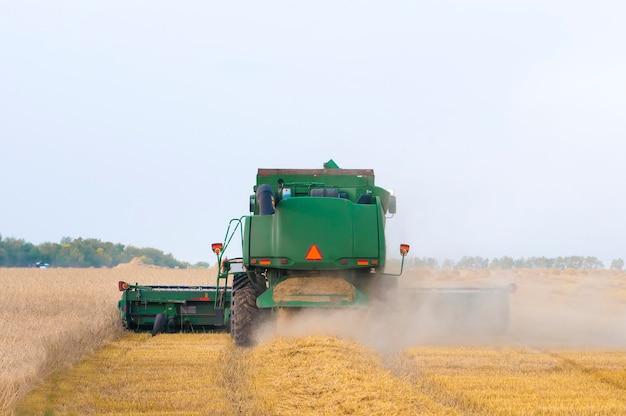 Зеленый комбайн убирает пшеницу с поля, вид сзади крупным планом