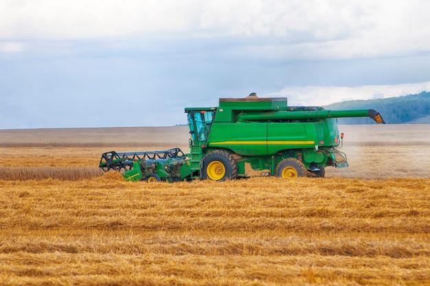 Зеленый комбайн убирает пшеницу с поля, вид сбоку