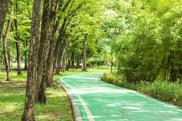 Green concrete road for bicycles and trees