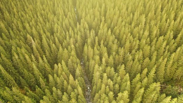 여름날 태양 산 강 공중 위에서 아래로 아무도 자연 풍경에 녹색 침엽수 숲