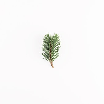 Green coniferous branch on light desk