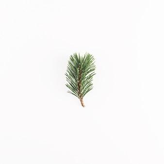 Ramo verde di conifere sullo scrittorio chiaro