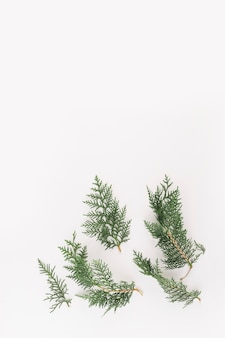 Green coniferous branches on light desk