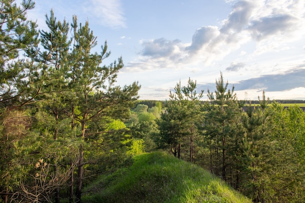 Green coniferous forest on a hill with a blue cloudy sky