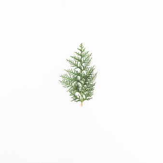 Green coniferous twig on light desk