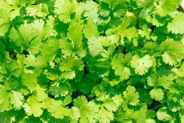 녹색 고 수 풀 배경 가까이 나무 배경