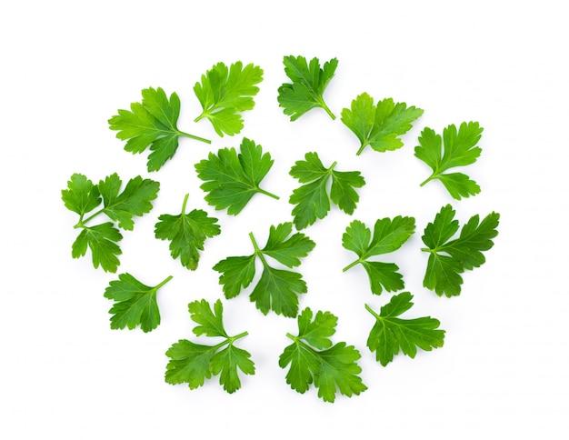 Зеленые листья кориандра на белой стене