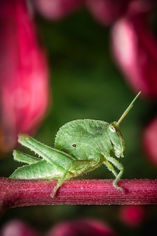 Green cricket standing on a wooden surface.