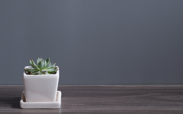 Green cucculent plant in white flower pot. potted succulent house plants on wooden floor