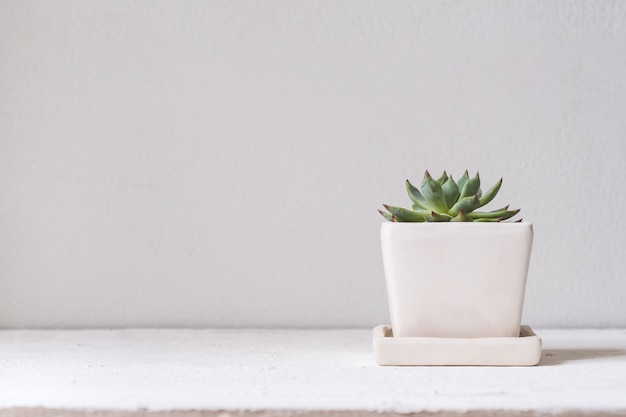 Green cucculent plant in white flower pot on white table against white wall.