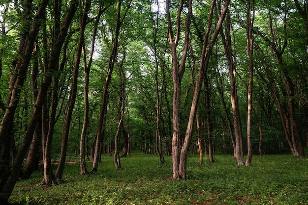 낮에는 푸른 낙엽 활엽수림, 아름다운 자연 배경