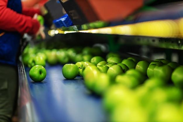 과일 창고에서 포장 라인에 녹색 맛있는 사과. 음식 산업. 프리미엄 사진