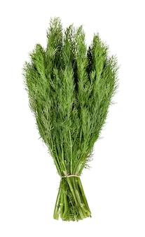 Зеленый укроп, изолированные на белом фоне