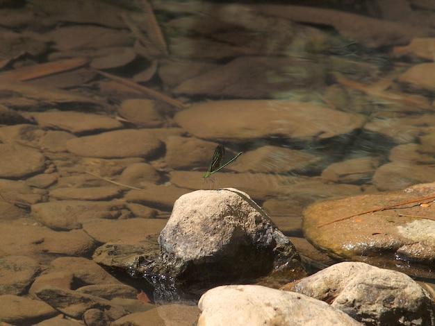 滝の岩の上の緑のトンボ
