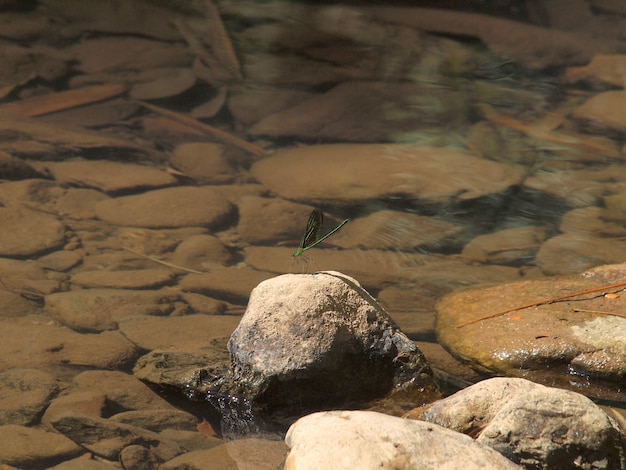 Green dragonfly on the rocks at waterfall