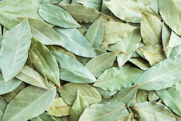 緑の乾燥した月桂樹の葉または月桂樹の背景上面図