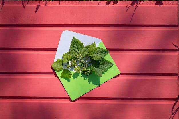 분홍색 나무 배경에 잎과 건포도 열매가 있는 녹색 봉투