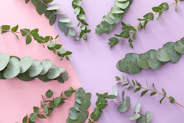 Green eucalyptus branches on pink background with copy space